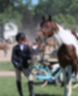 Experince Horse Shows