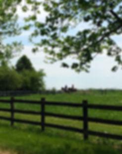 Enjoy rides in the hunt field