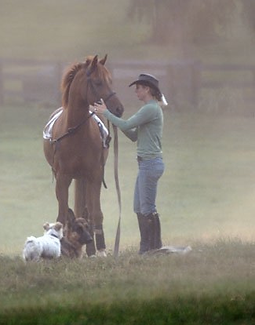 Learn Natural Horsemanship Techniques