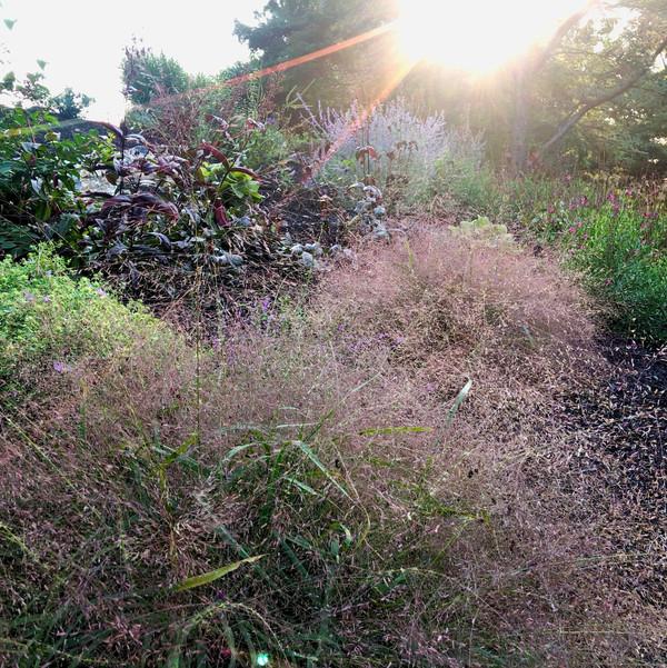 Mixed perennial planting for sun- Ruth Consoli Design