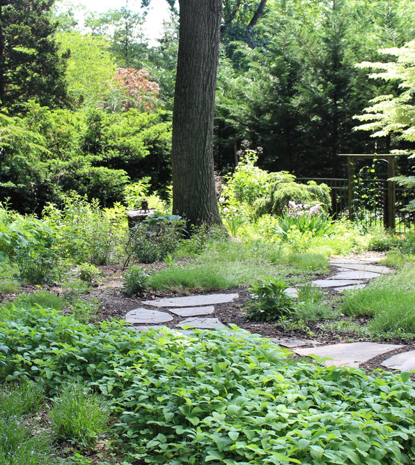 Backyard Lawn Replacement Using Native plants Ruth Consoli Design