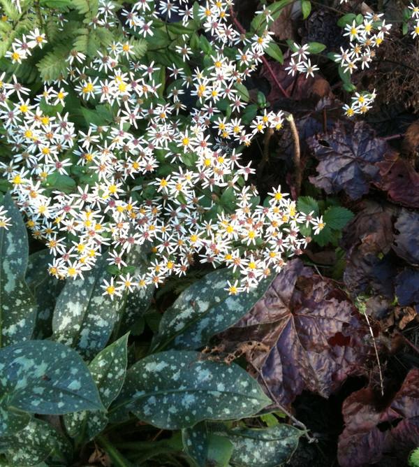 Shade perennials, flowers and foliage
