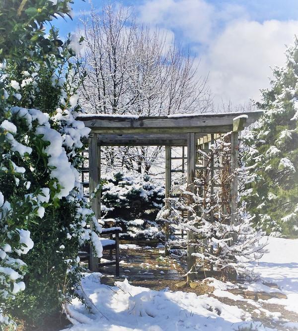 Winter in the Garden - Ruth Consoli Design