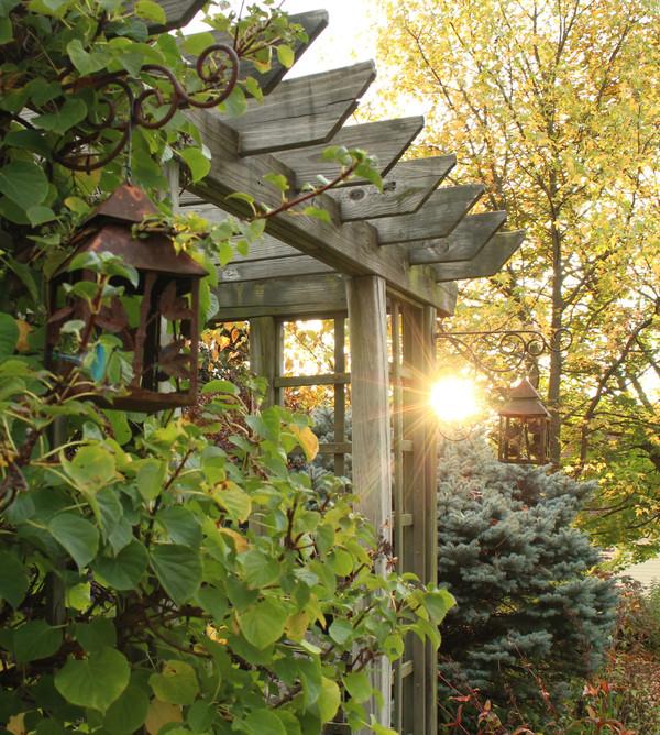 Backyard pergola evening sun views