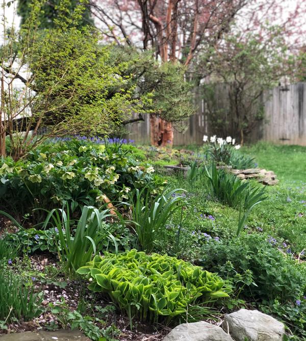 Emerging spring plants