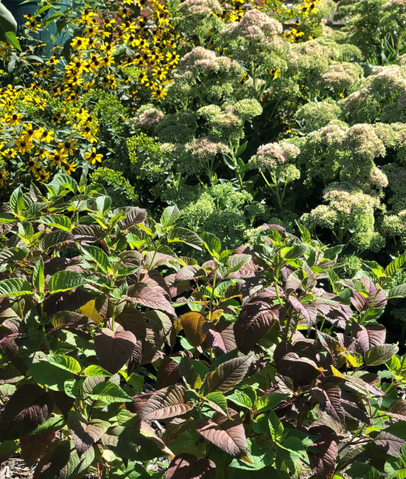Sun loving native perennials - Ruth Consoli Design