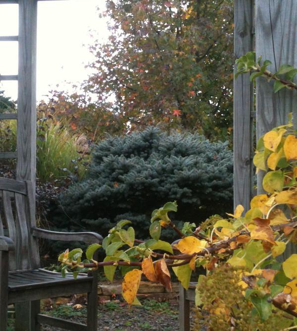 Backyard relaxation in the pergola admiring autumn in the garden