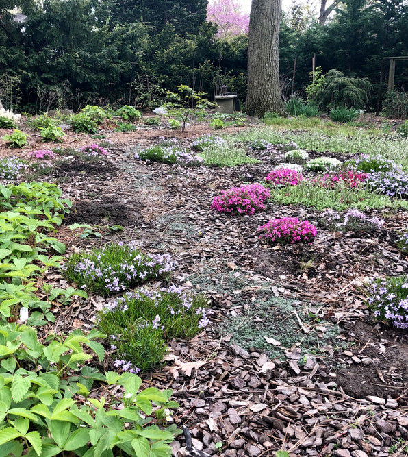 Native ground covers as turf replacements