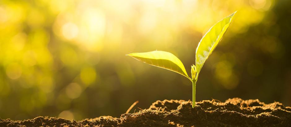 Crescimento da fé