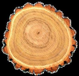 Bois de Robinier faux acacia