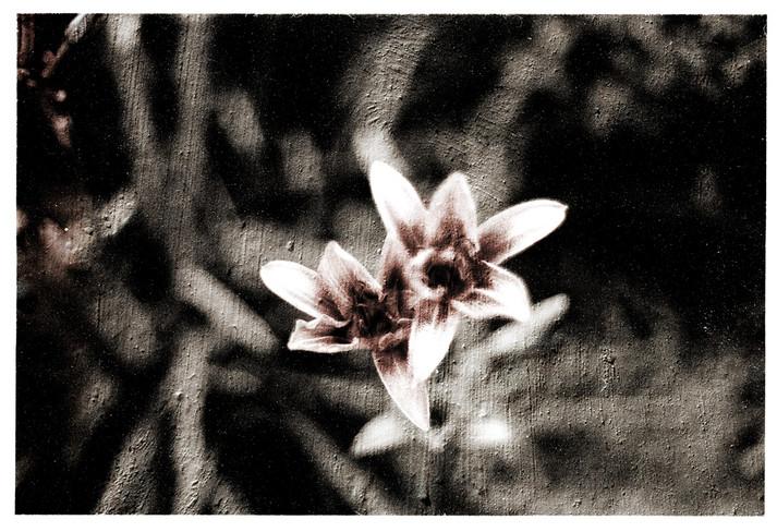 Waiting+for+Love-Hyacinth.jpg