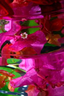 Munish Khanna Art flowers in water_18544 wix.JPG