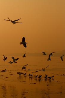 Munish Khanna Art _MG_6061 wix.JPG