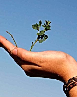 Hand Holding a Plant_edited.jpg