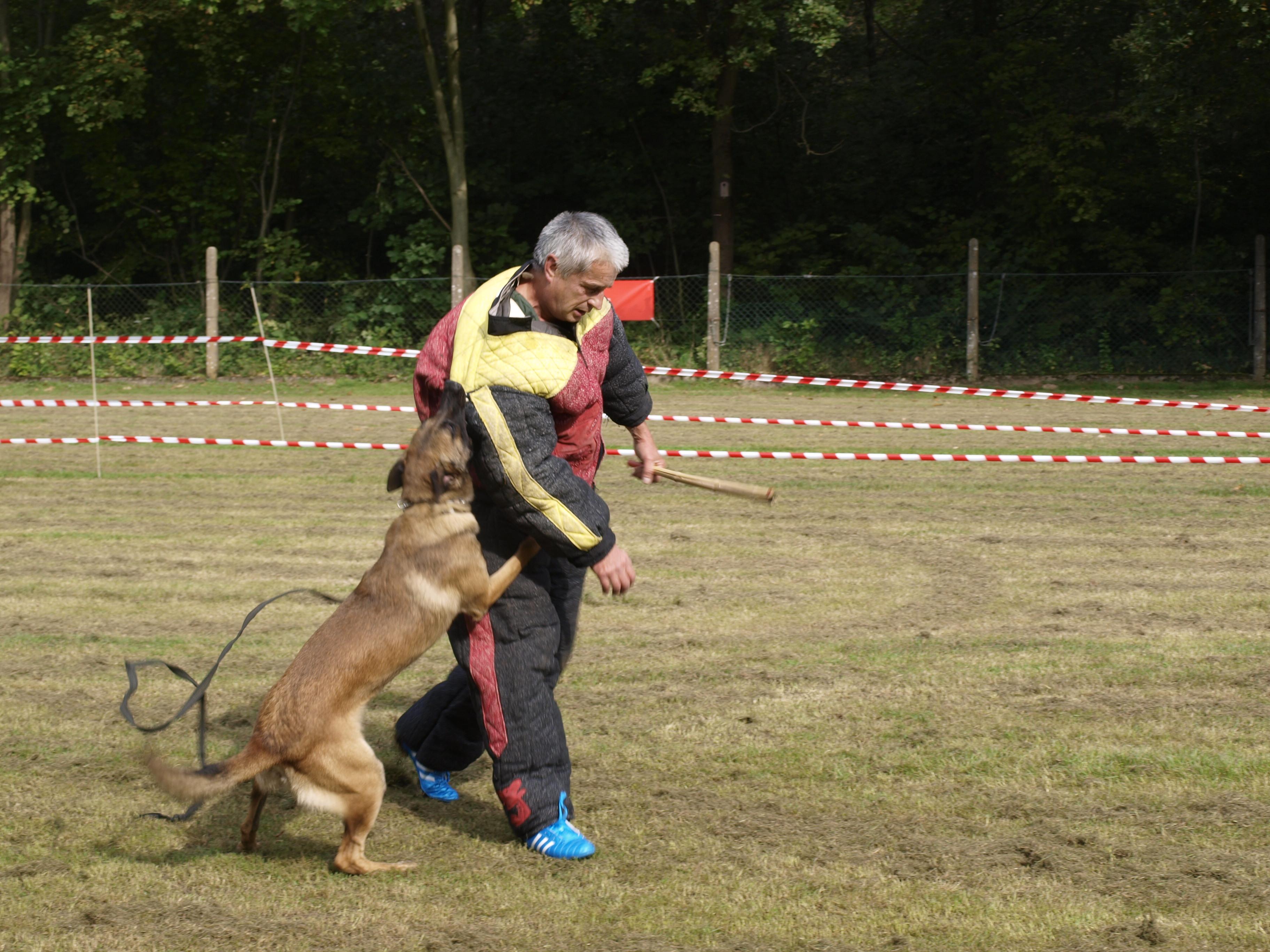 Leo Polizeihund