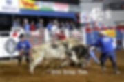 J1320007= bull fighters.JPG