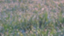 meadow-in-pastel-4107368.jpg