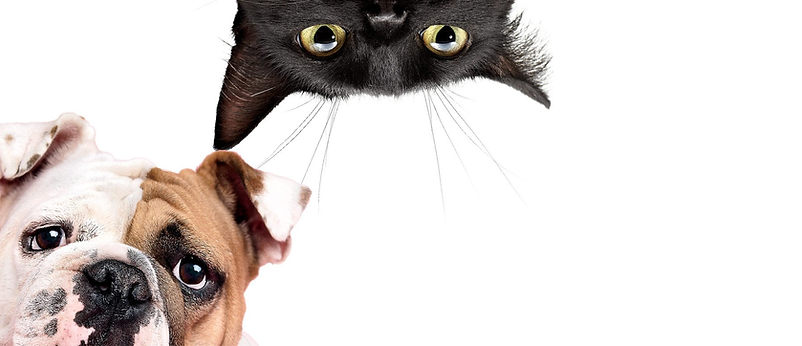 Inside-Cat-Dog.png