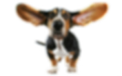 Funny_Dog_Transparent_PNG_Clipart.png
