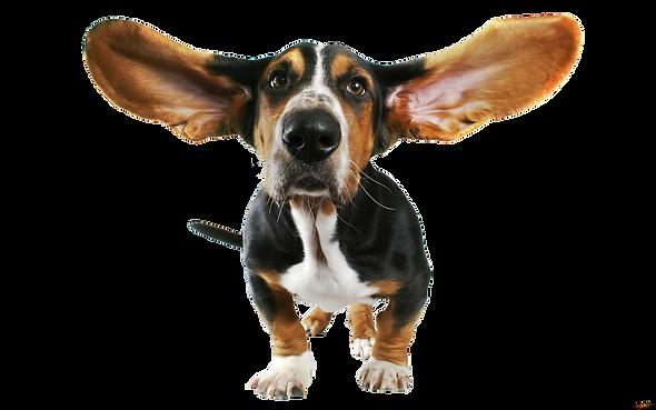 Funny_Dog_Transparent_PNG_Clipart.png