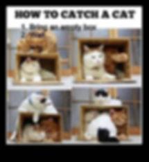 0df27aca926a096a439f4391b062ecf0--cat-tr