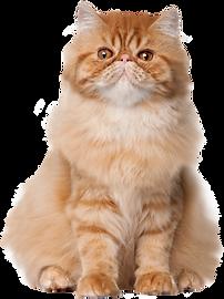 Sitting_Cat_PNG_Clip_Art-2685.png