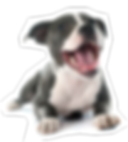 kisspng-american-pit-bull-terrier-staffo