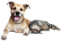 dog-and-cat-transparent-8.png