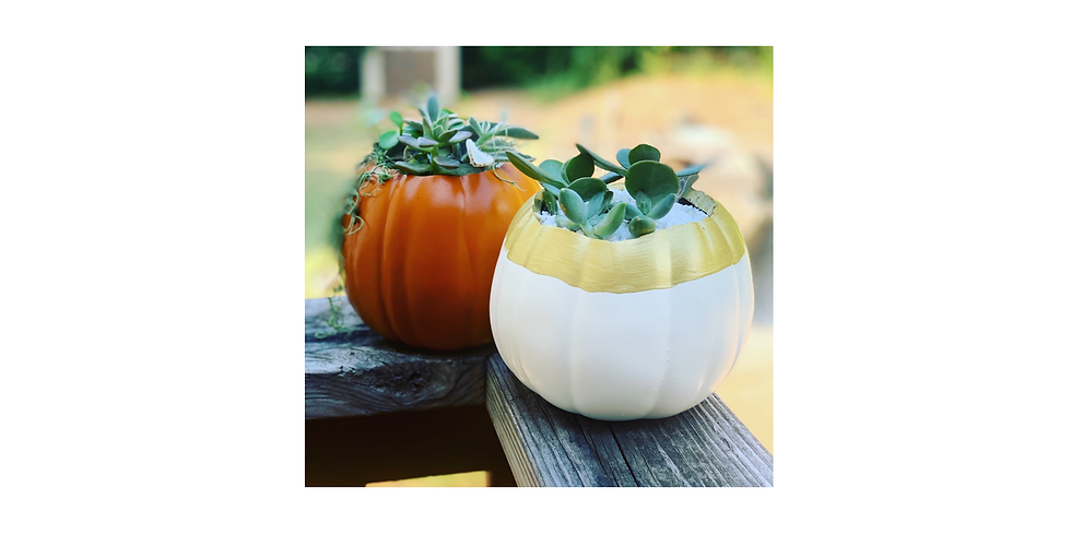 Fall Succulent Planters