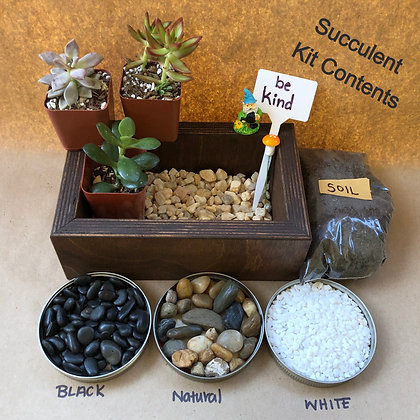 Succulent Planter Kit