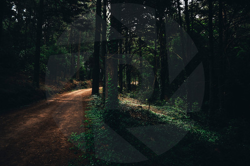 No one knows... but these woods are full of secrets