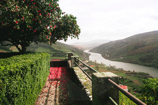 Douro view from golden sit