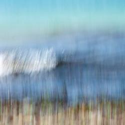 Ecaille de la mer, 2012