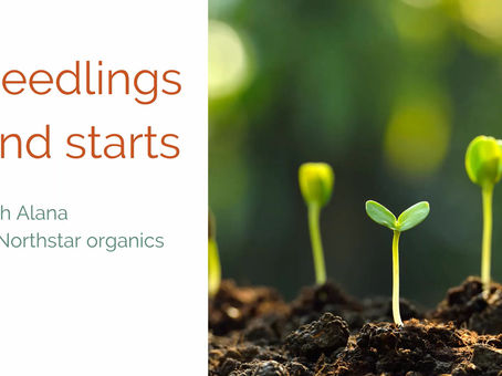 Seedlings and Starts