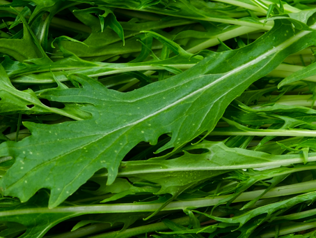 Mizuna - greens with possibilities!