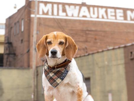 #MILWAUKEEDAY DOG CHALLENGE