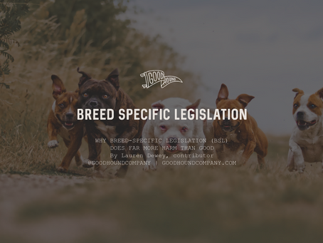 Why Breed-Specific Legislation (BSL) Does Far More Harm Than Good