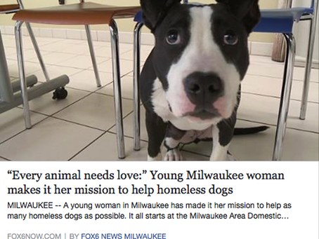 EVERY ANIMAL NEEDS LOVE