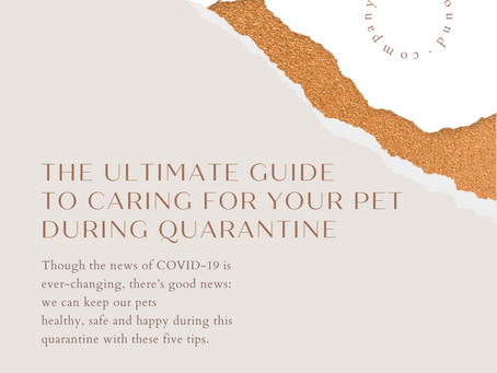 The Ultimate Guide to Caring for Your Pet During Quarantine