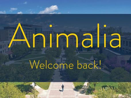 Welcome (back) to Animalia!