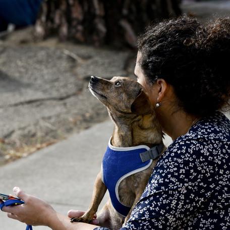 Human Animal Relationship