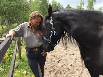 Tacit Knowledge Within Equine-Assisted Intervention (EAI)
