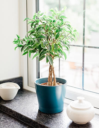 Plant on windowsill