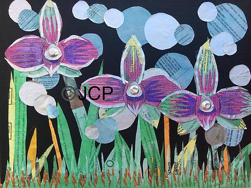 Magenta Orchid Medical Garden