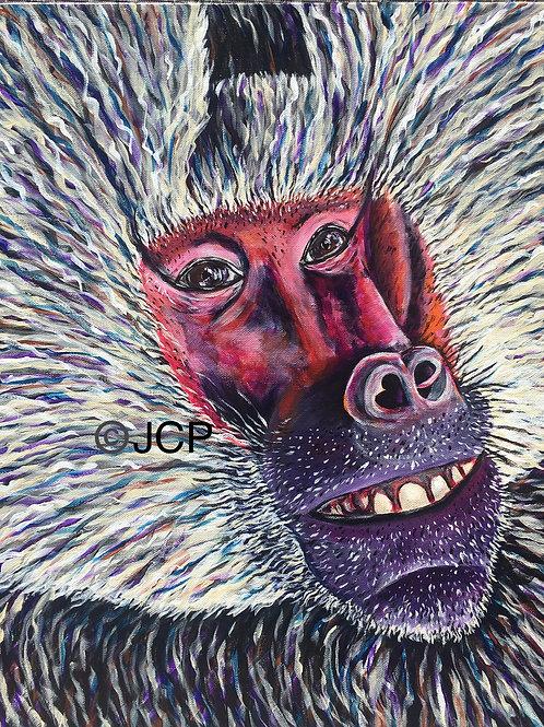 Japanese Macaque, aka Snow Monkey