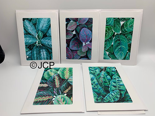 Things that Grow, Plant series, 5 pack set of photo mat card prints