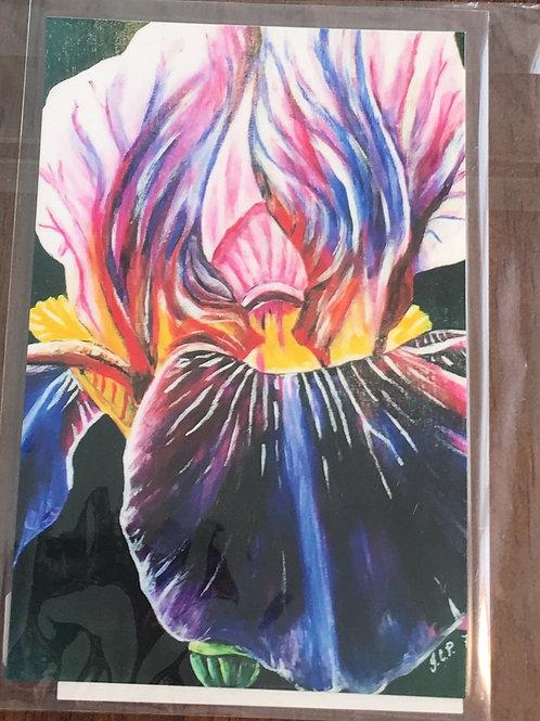 Rainbow Iris magnet