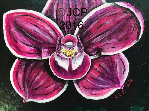 Pink Cymbidum Orchid