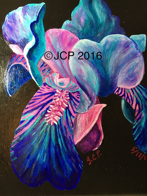 Teal Bearded Iris