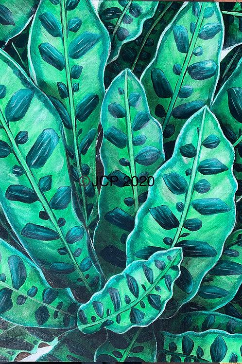 For the Love of Green, Rattlesnake Plant